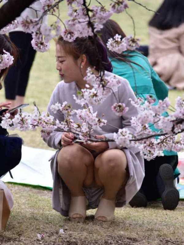 花見 パンチラ画像 54